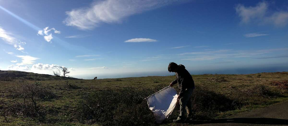 A research team led by Dan Salkeld of Colorado State University collects ticks using sheets of white flannel along the coast of Northern California, including in Point Reyes National Seashore.