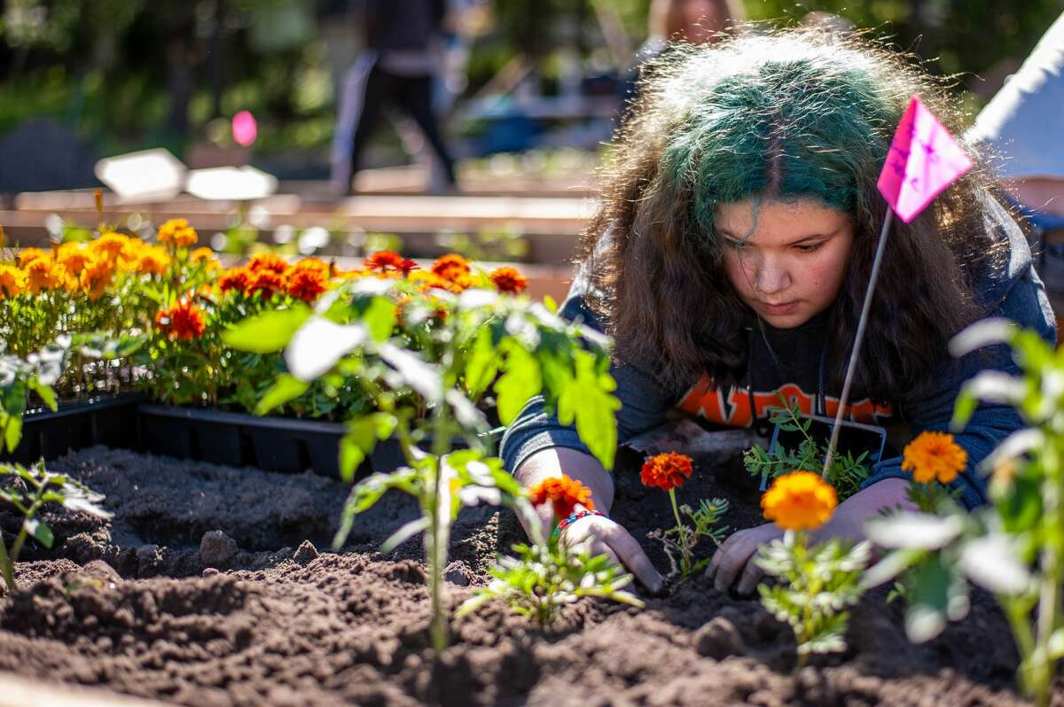 Amelia Schwartz plants flowers for the Sanford Grows community garden on May 29, 2021 near the Sanford Village Park. These flowers are meant to keep bugs away from the nearby produce plants.