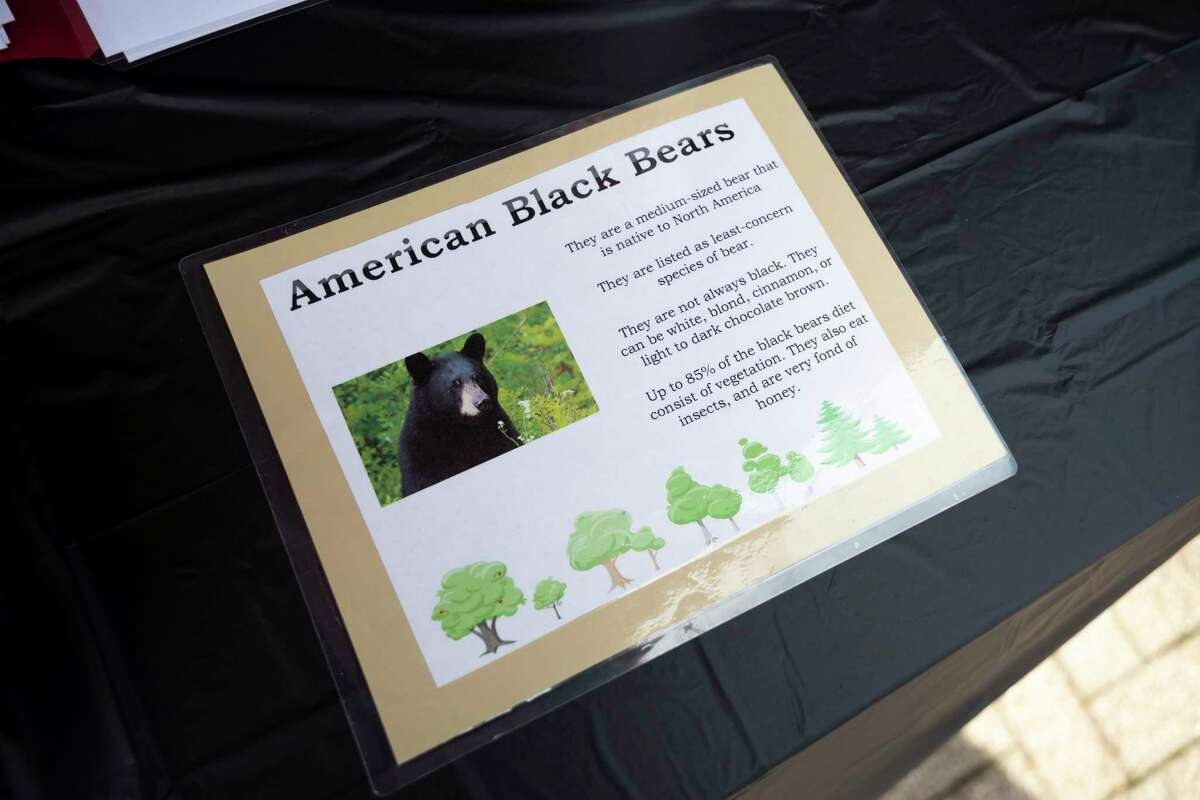 A fact sheet about American black bears is seen during the inaugural Bear Crawl at The Ferm, Saturday, May 29, 2021, in downtown Conroe. The event was sponsored by Office Evolution and funds raised will be used to secure a property for a Bear and Exotic Animal Rescue Sanctuary.