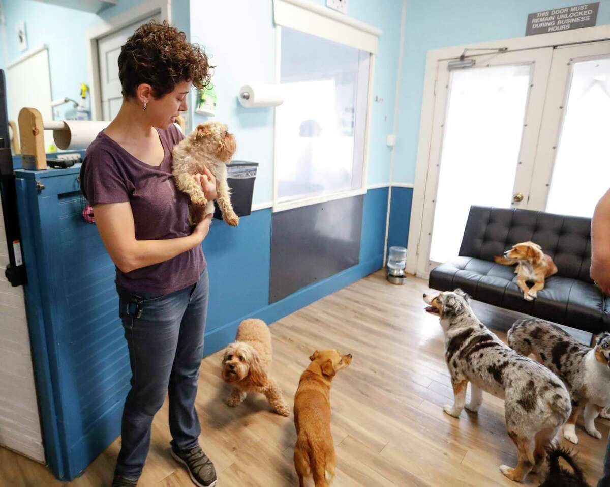Kerry Adams, owner of The Best Little Doghouse in Texas, holds Duffy, a Brussels Griffon, Wednesday, May 19, 2021, in Houston. The Best Little Doghouse in Texas has seen a major increase in business since February because so many pet parents are returning to their offices full-time.