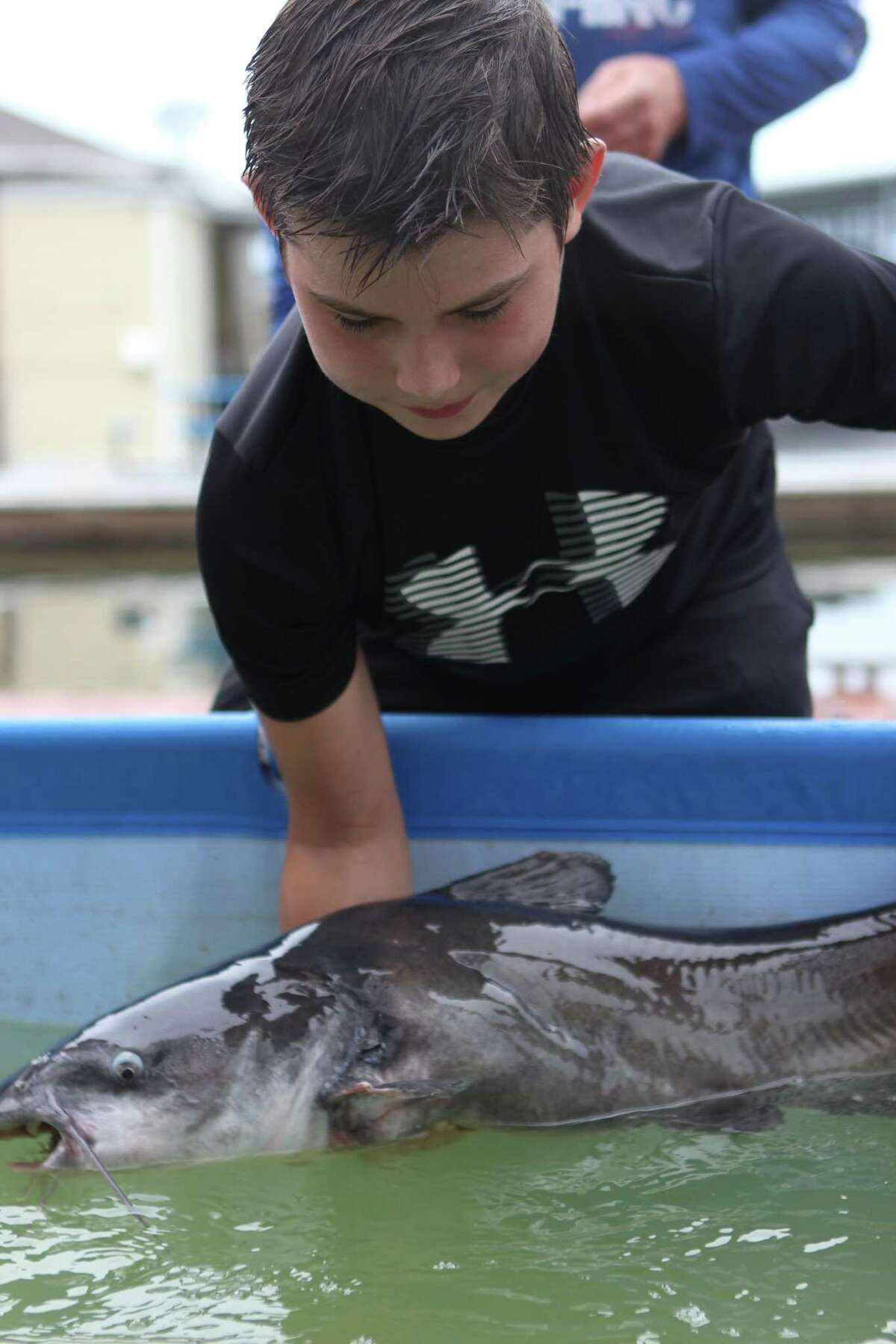 John Sigler, 11, pulls a Blue Catfish out of a pool to prepare it for tagging during Kids Fish Fest Saturday, Sept. 22, 2018 at Walden Marina. The event was organized to help teach children about the importance of conservations among other angler safety and fish identification topics.