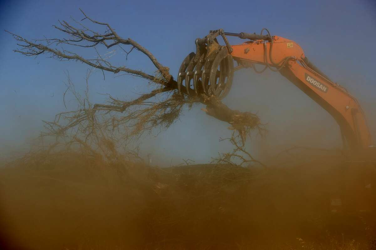 A worker with Fowler Brothers Farming uses an excavator to place almond trees into a shredder during an orchard removal project in Snelling. One Central Valley farmer had 600 acres of his almond orchard removed and shredded, and now plans to replace the almonds with a crop the requires less water, reports Getty.
