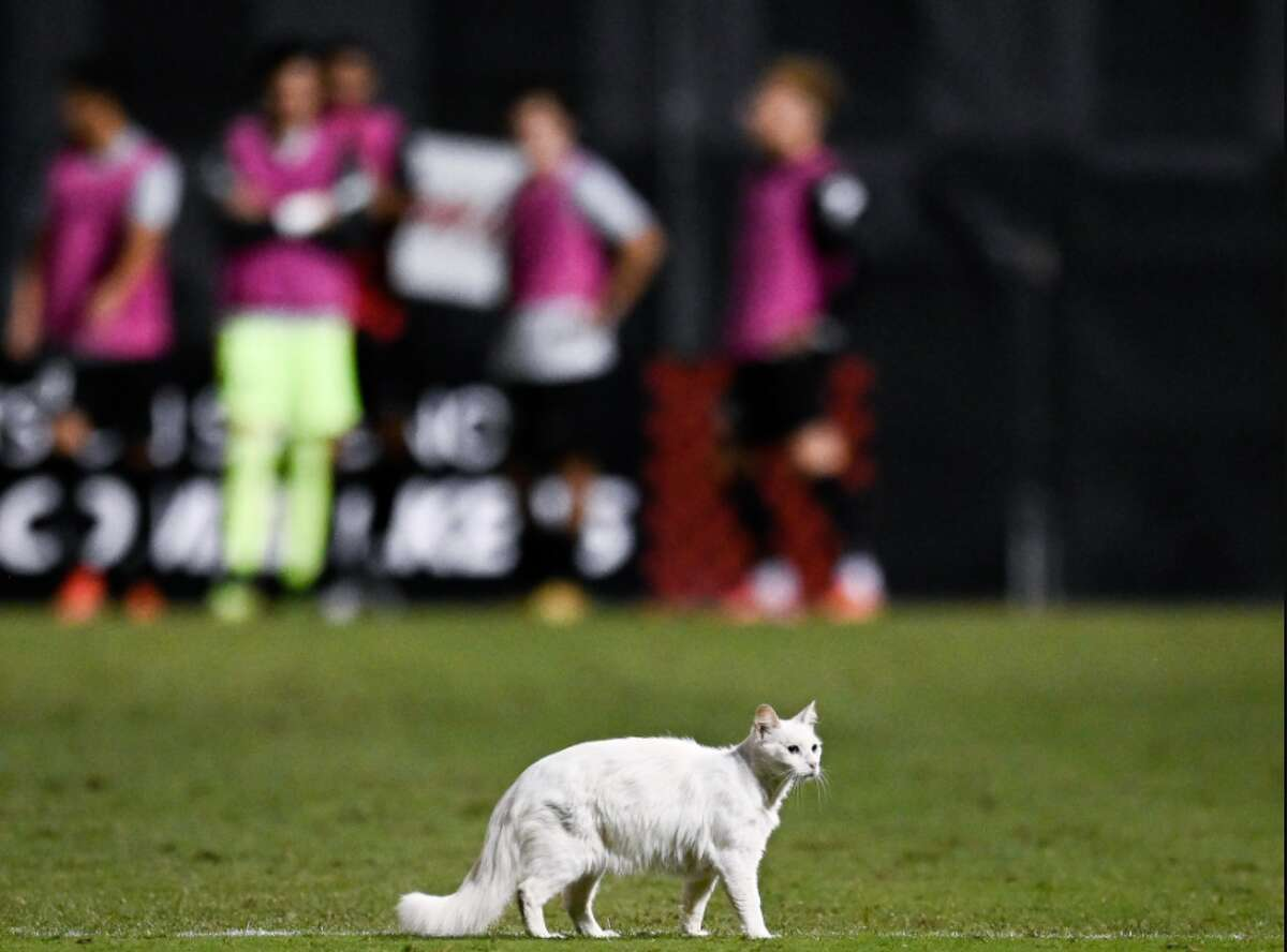 A white cat was one of the highlights during the South Texas Derby between San Antonio FC and Rio Grande Valley FC on Saturday.