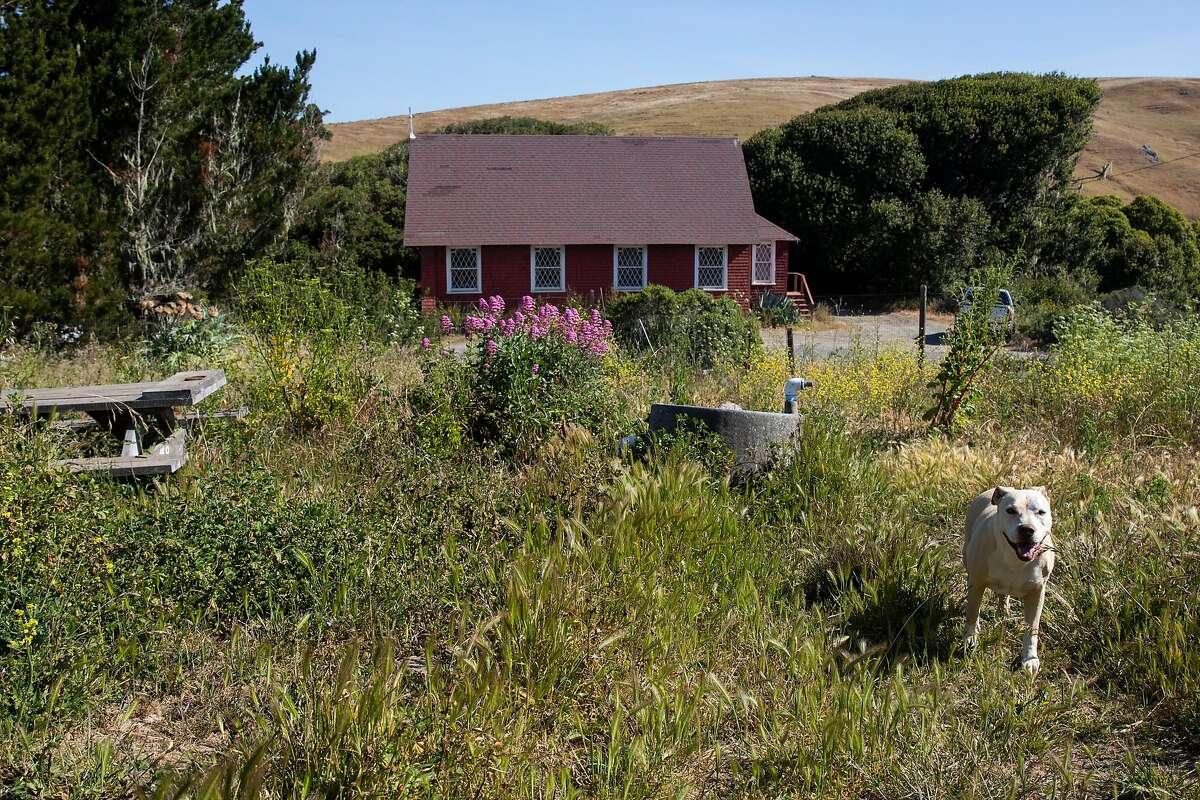 A farm dog roams the garden on Hog Island Oyster Company's 250-acre Leali Ranch in Marshall.
