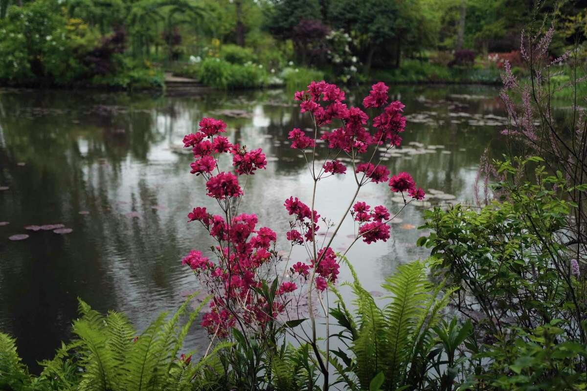 The Japanese-inspired water garden of Claude Monet's house, French impressionist painter who lived from 1883 to 1926, waits ahead of the re-opening, in Giverny, west of Paris, Monday May 17, 2021. Lucky visitors who'll be allowed back into Claude Monet's house and gardens for the first time in over six months from Wednesday will be treated to a riot of color, with tulips, peonies, forget-me-nots and an array of other flowers all competing for attention.