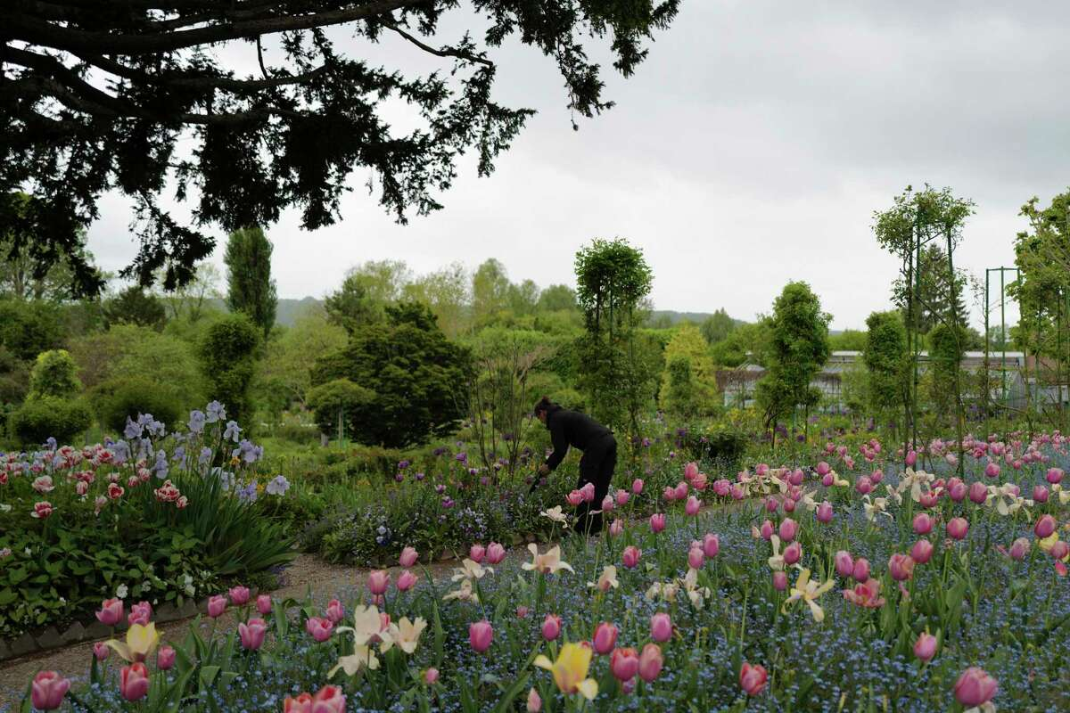 English gardener Claire-Helene Marron works in the garden of Claude Monet's house, French impressionist painter who lived from 1883 to 1926, ahead of the re-opening, in Giverny, west of Paris, Monday May 17, 2021. Lucky visitors who'll be allowed back into Claude Monet's house and gardens for the first time in over six months from Wednesday will be treated to a riot of color, with tulips, peonies, forget-me-nots and an array of other flowers all competing for attention.