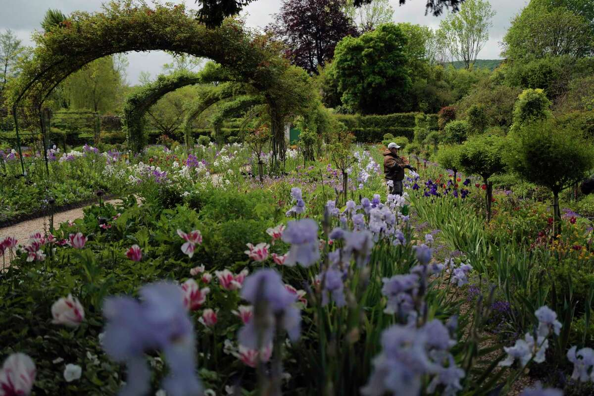 A gardener works in the Japanese-inspired water garden of Claude Monet's house, French impressionist painter who lived from 1883 to 1926, ahead of the re-opening, in Giverny, west of Paris, Monday May 17, 2021. Lucky visitors who'll be allowed back into Claude Monet's house and gardens for the first time in over six months from Wednesday will be treated to a riot of color, with tulips, peonies, forget-me-nots and an array of other flowers all competing for attention.