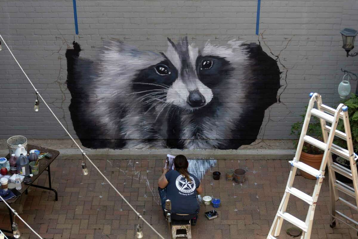 Anat Ronen works on a 3D sidewalk chalk art piece of a racoon at the Conroe Art League's courtyard, Saturday, May 8, 2021, in downtown Conroe. The Conroe Art League opens its June show and announces new summer hours.