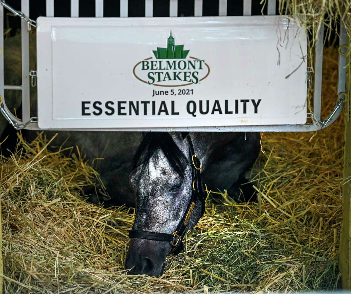 2021 Belmont Stakes winner Essential Quality sleeps in his stall at Belmont Park Sunday June 6, 2021 in Elmont, N.Y. . Photo Special to the Times Union by Skip Dickstein