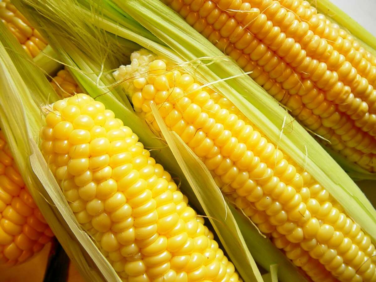 Sweet corn will lose much of its sugar within a few days of picking.