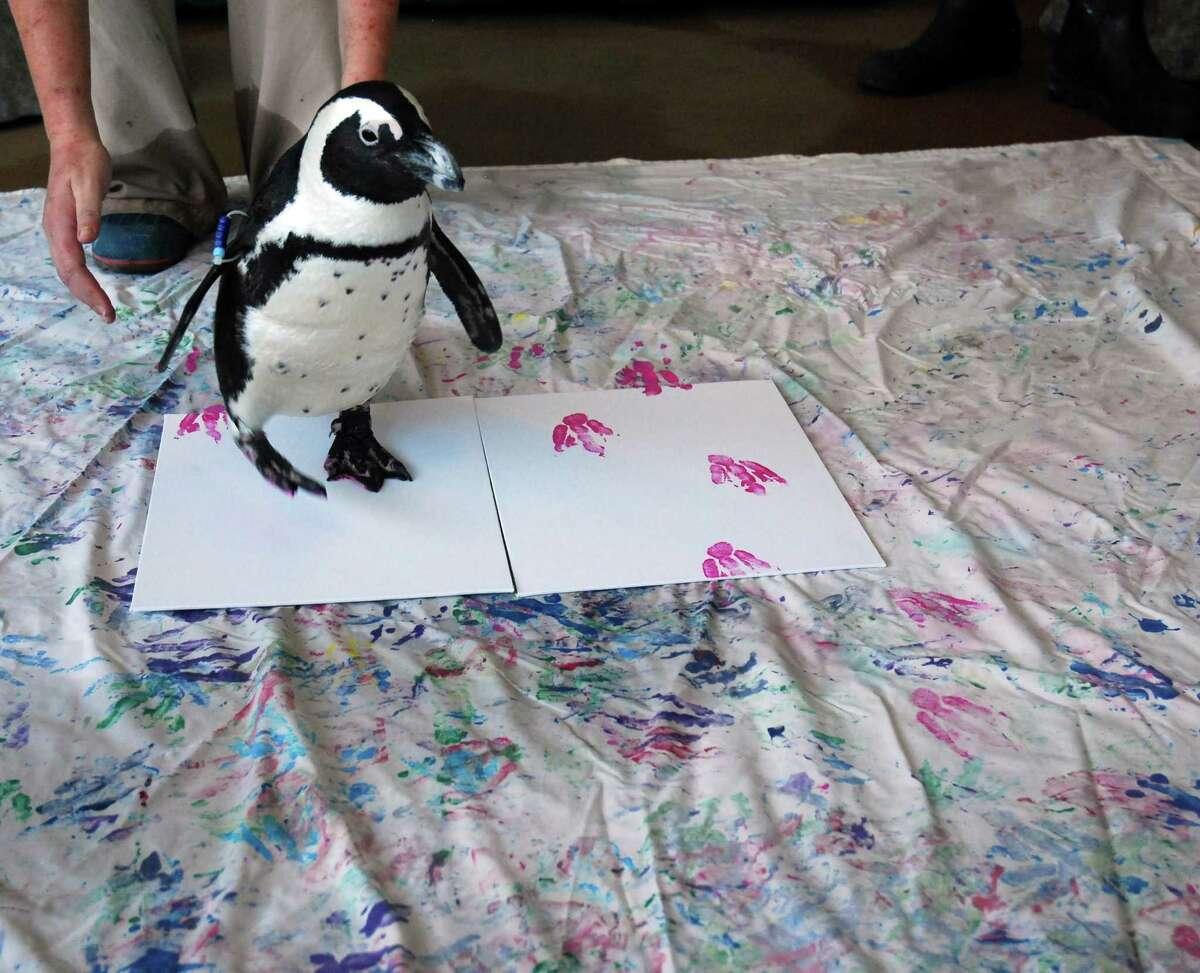 Mystic Aquarium offers a virtual painting program with penguins.