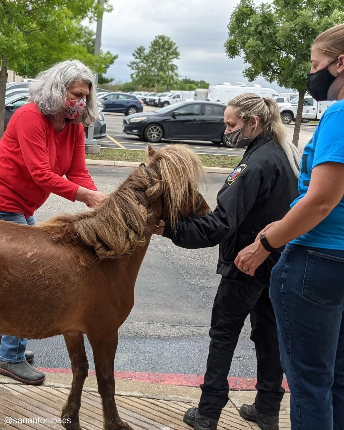 On Monday, ACS posted on its Facebook page that its offers recused a pony named Churro after a pack of dogs injured him.
