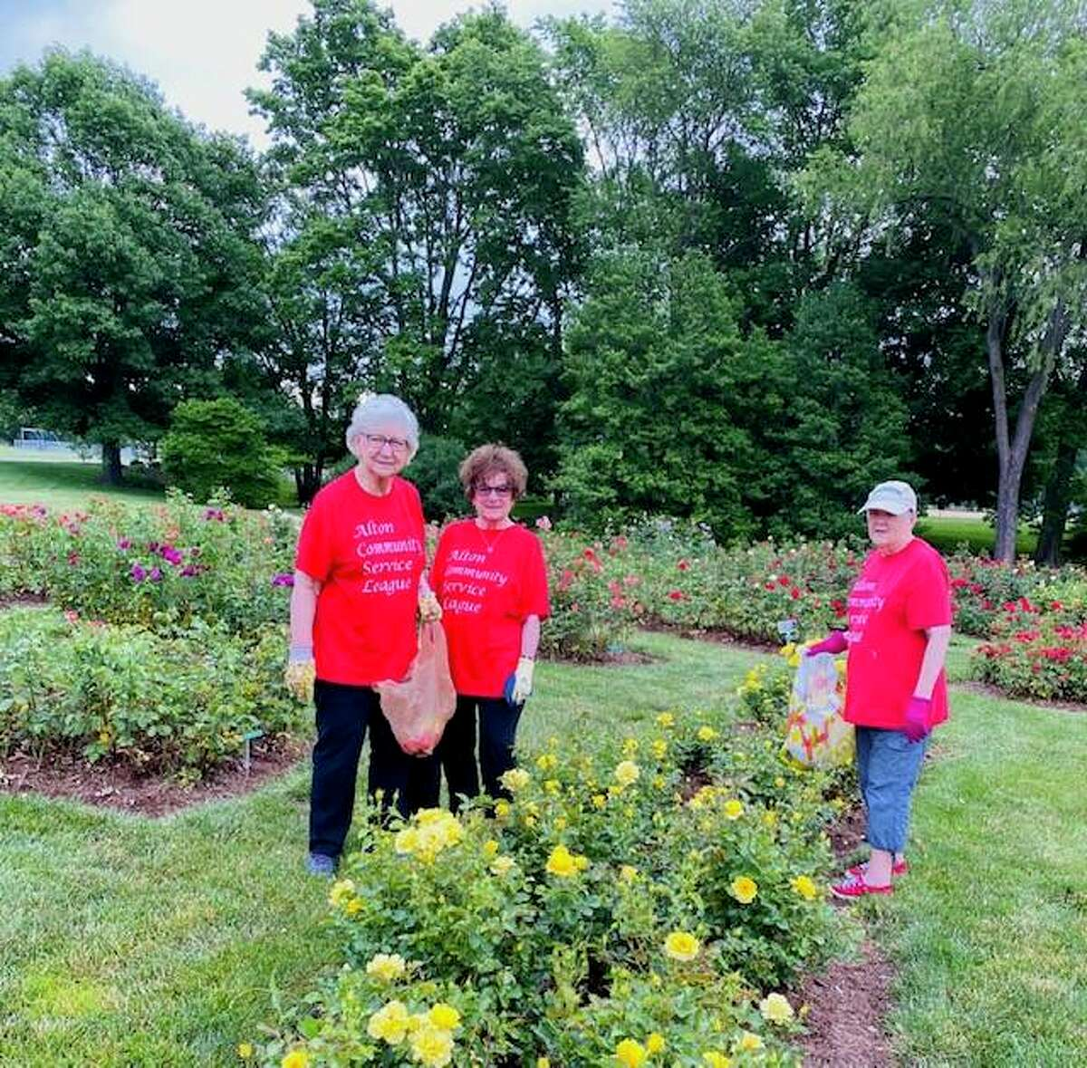 Alton Community Service League members, from left, Jean Rathgeb, Carol Fritz and Carol Morris deadhead roses at the Nan Elliott Memorial Rose garden at Gordon Moore Park in Alton. The All-America Rose Selections accredited garden contains more than 125 varieties of roses, 1,600 rose bushes and a gazebo.