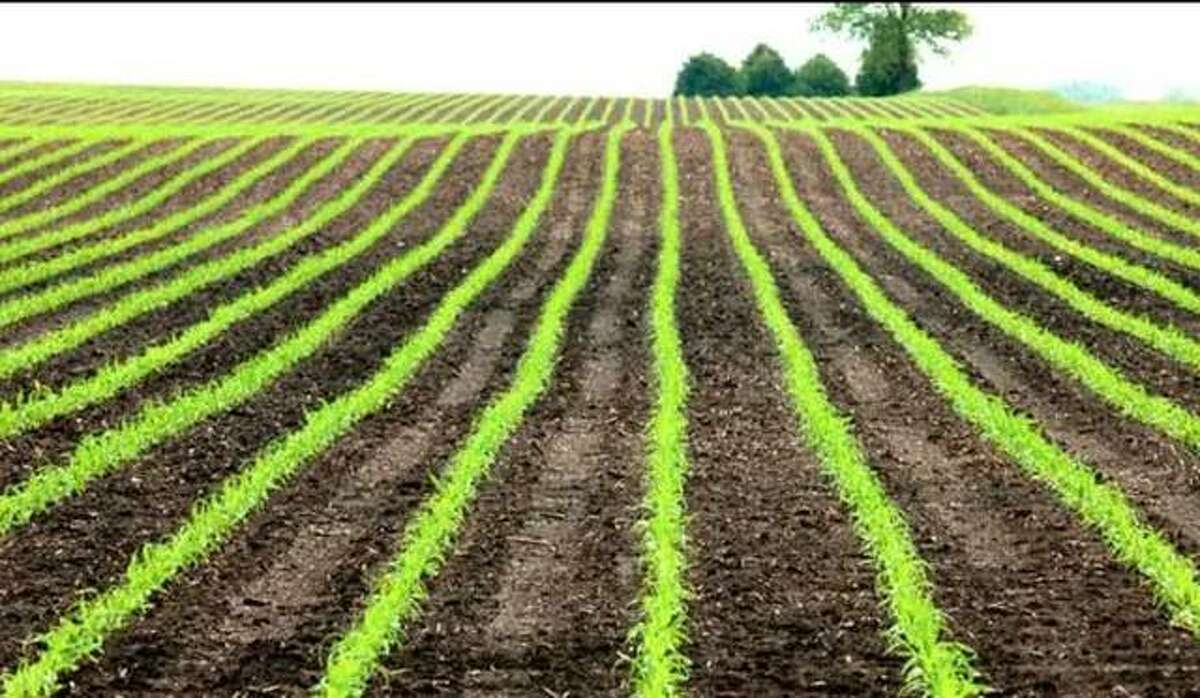 As of Sunday, 93 percent of Illinois' corn crop has emerged and 84 percent percent of the soybeans have emerged. Both figures are higher than the five-year averages for this point of the season.