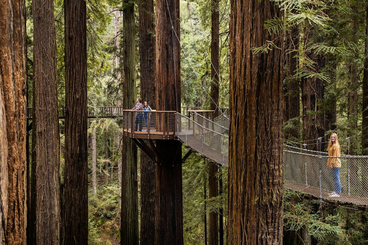 The Redwood Skywalk winds among coast redwoods and spruce at Sequoia Park Zoo in Eureka.