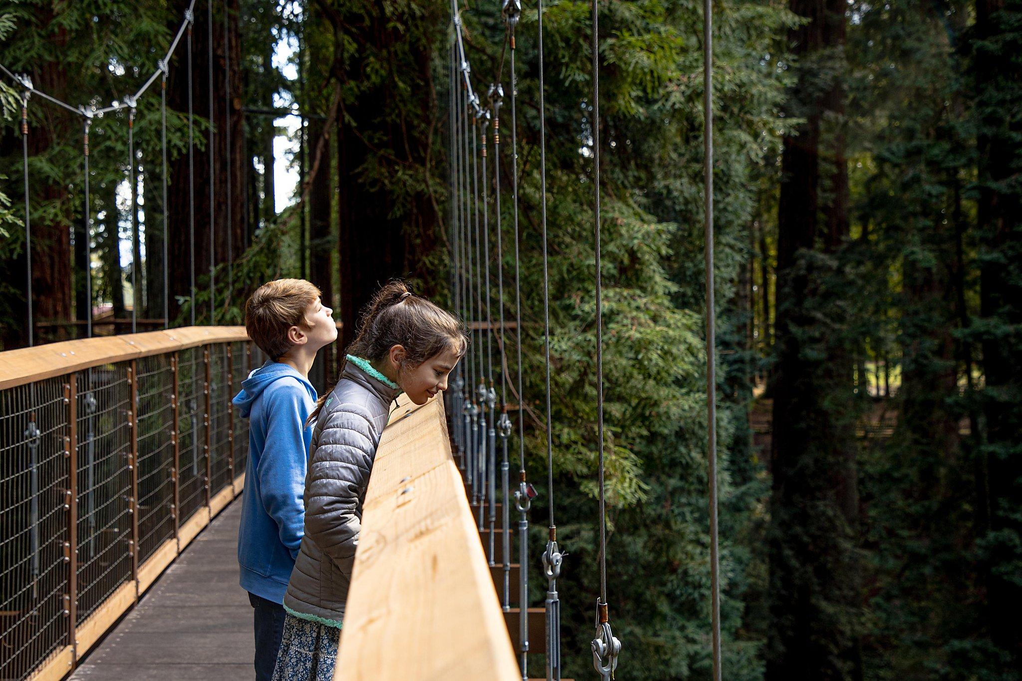 New redwood canopy boardwalk hangs 100 feet off the forest floor in Eureka