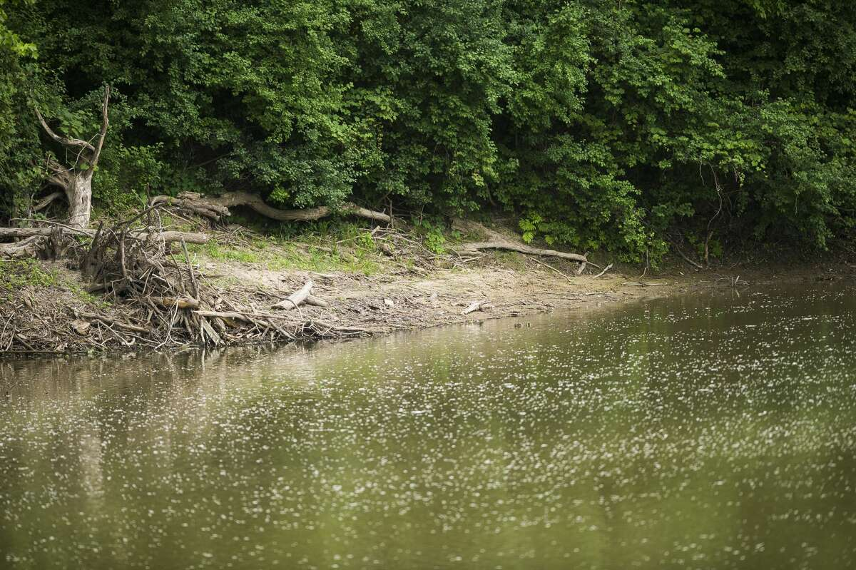 Officers with the Midland Police Department were dispatched to the 2600 block of Tittabawassee River Road at 10:27 a.m. Saturday, June 5, 2021 to investigate a report of a body seen floating in the river. (Katy Kildee/kkildee@mdn.net)
