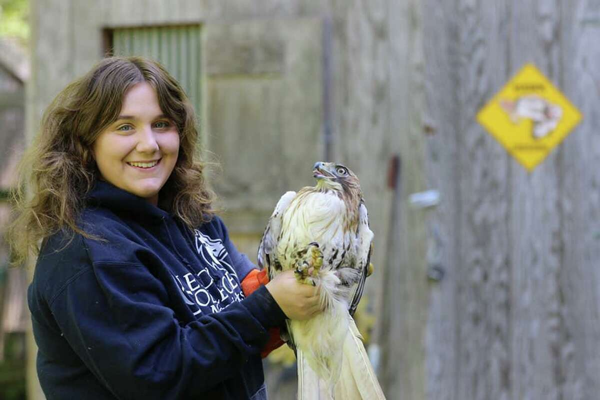 Christine Peyreigne, owner of Christine's Critters, a Weston-based nonprofit sanctuary for birds of prey, with the red-tailed hawk from Newtown that was found with an arrow through its body.