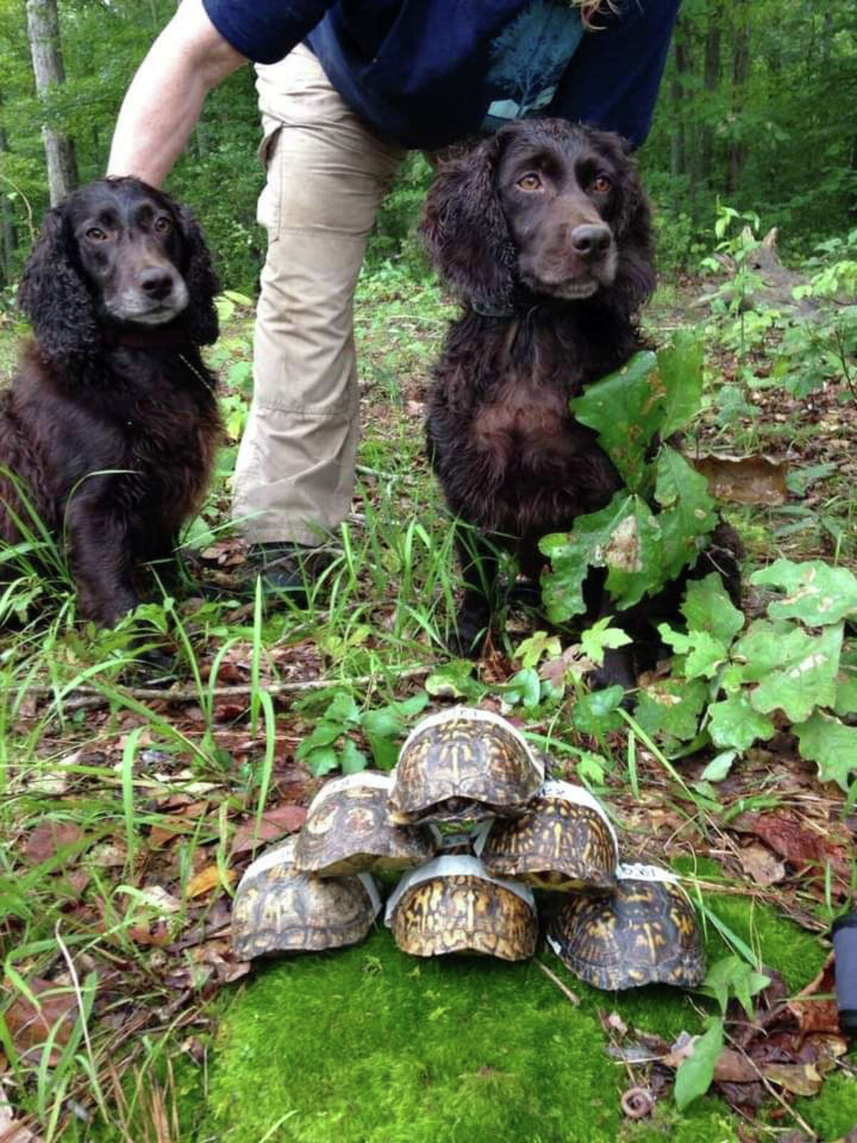 John Rucker's dogs with some of the box turtles they found in Raleigh, N.C., in 2015.
