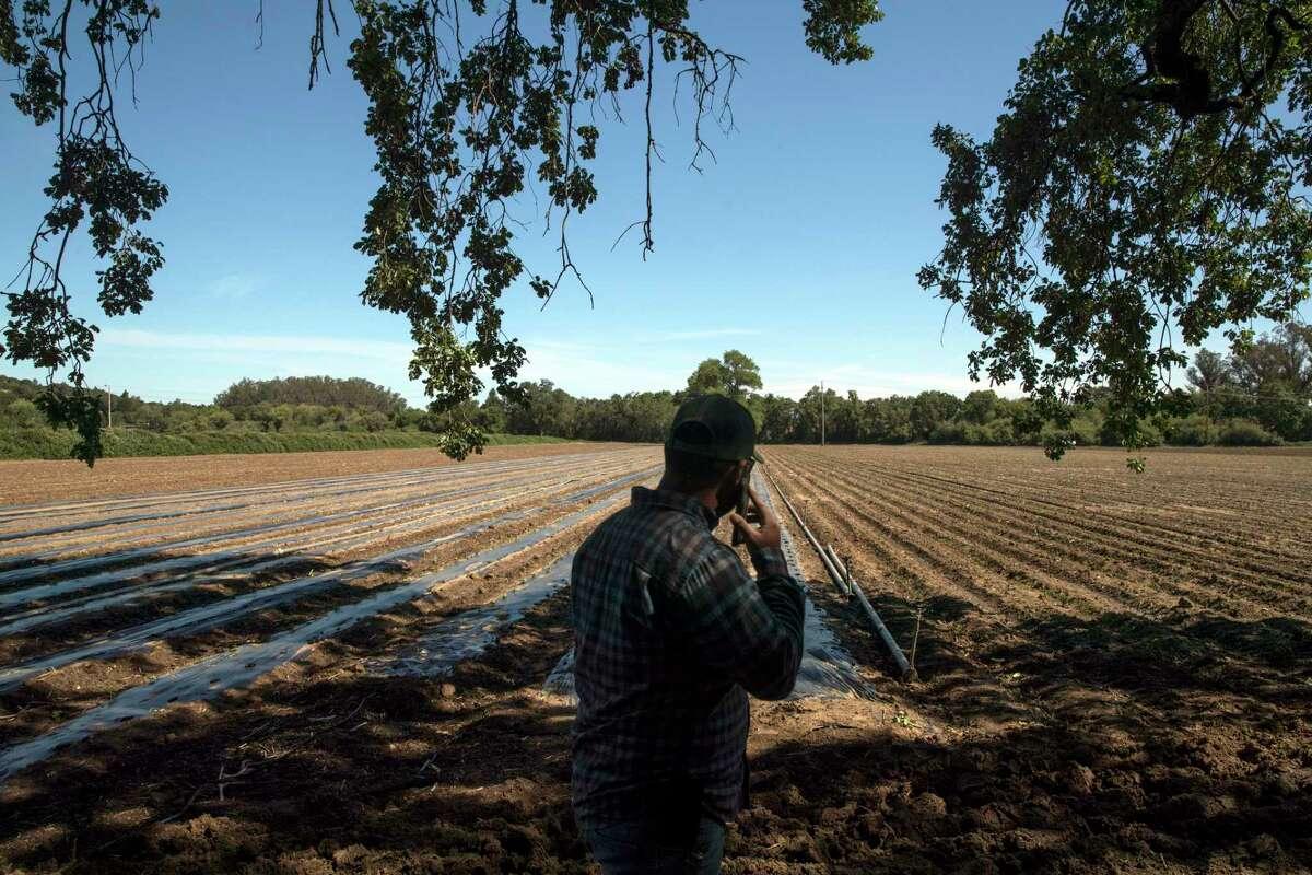 Gabriel Castañeda looks out over his field on his family farm outside Santa Rosa.