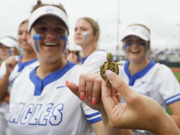 Barbers Hill players bring out the team's unofficial mascot, a turtle named 'Frank the Tank' before the team's Class 5A state semifinal game, Friday, June 4, 2021, in Leander. Photo: Jason Fochtman/Staff Photographer / 2021 © Houston Chronicle