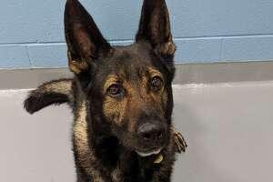 East Hampton police canine officer Ardo