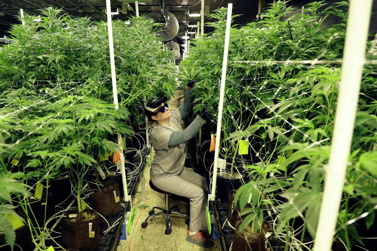 The legislation that would create an adult-use cannabis program in Connecticut is one of dozens of bills awaiting action on the last day of the legislative session.
