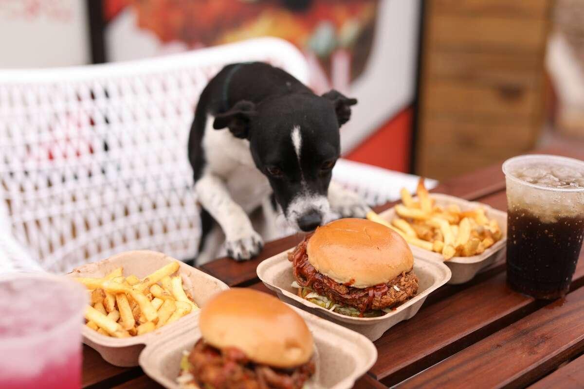 A dog sniffs The Ranchito