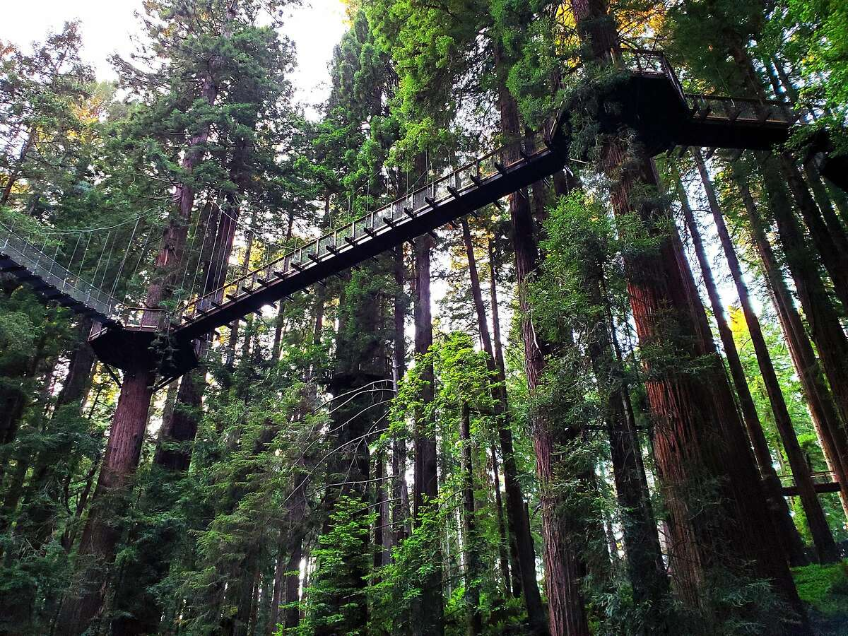 A view from the forest floor of the new Redwood Sky Walk in Sequoia Park Zoo in Eureka.