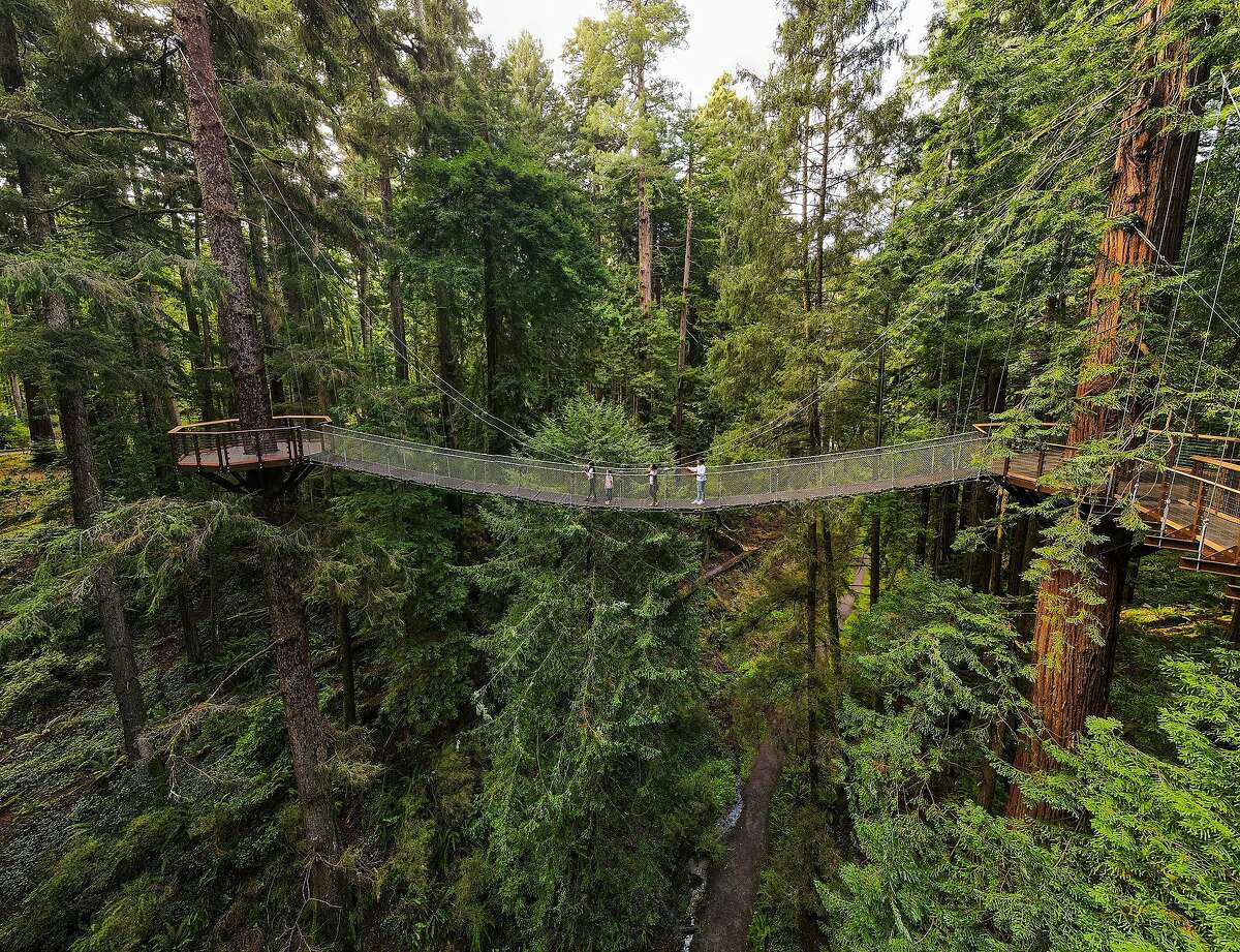 A cable bridge links the boardwalk to an old growth spruce tree across a ravine in the park-zoo.