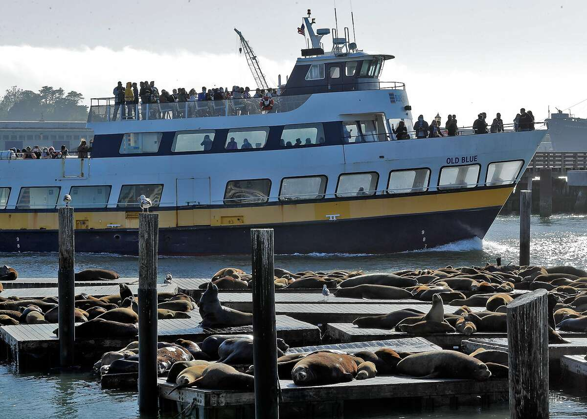 The sea lions lay on the docks at Pier 39 as the toursits move by on the Blue and Gold fleet ferry boat the Old Blue in San Francisco, Calif., on Monday, May 24, 2021. Tourism has begun to pick up again in San Francisco in advance of the travel season as the city's reopening has offered people the chance to visit with little fear of infection of COVID-19.