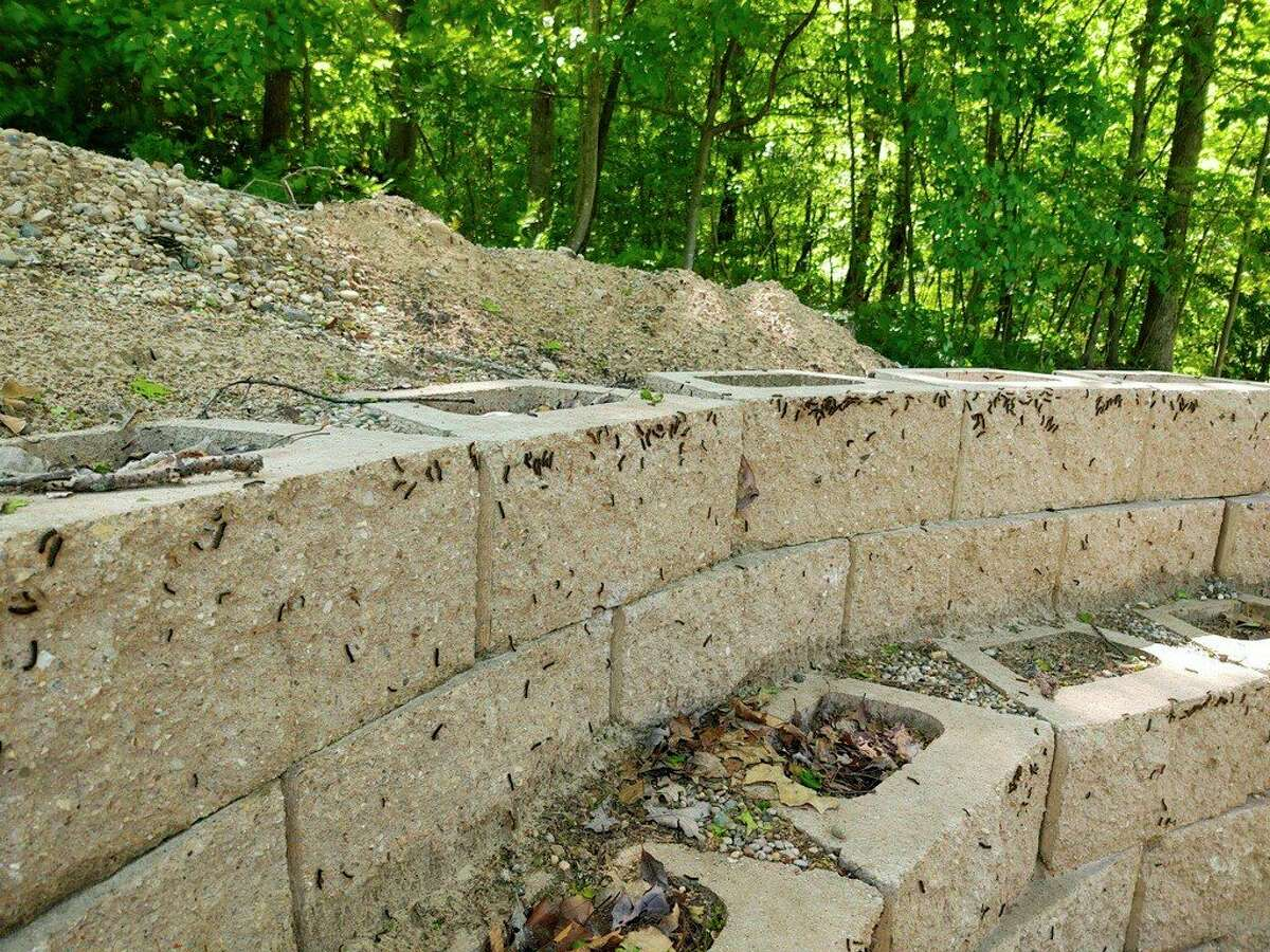 Gypsy moth larvae congregate on this retaining wall at Mike Quillen's home in Morton Township. (Submitted photo)