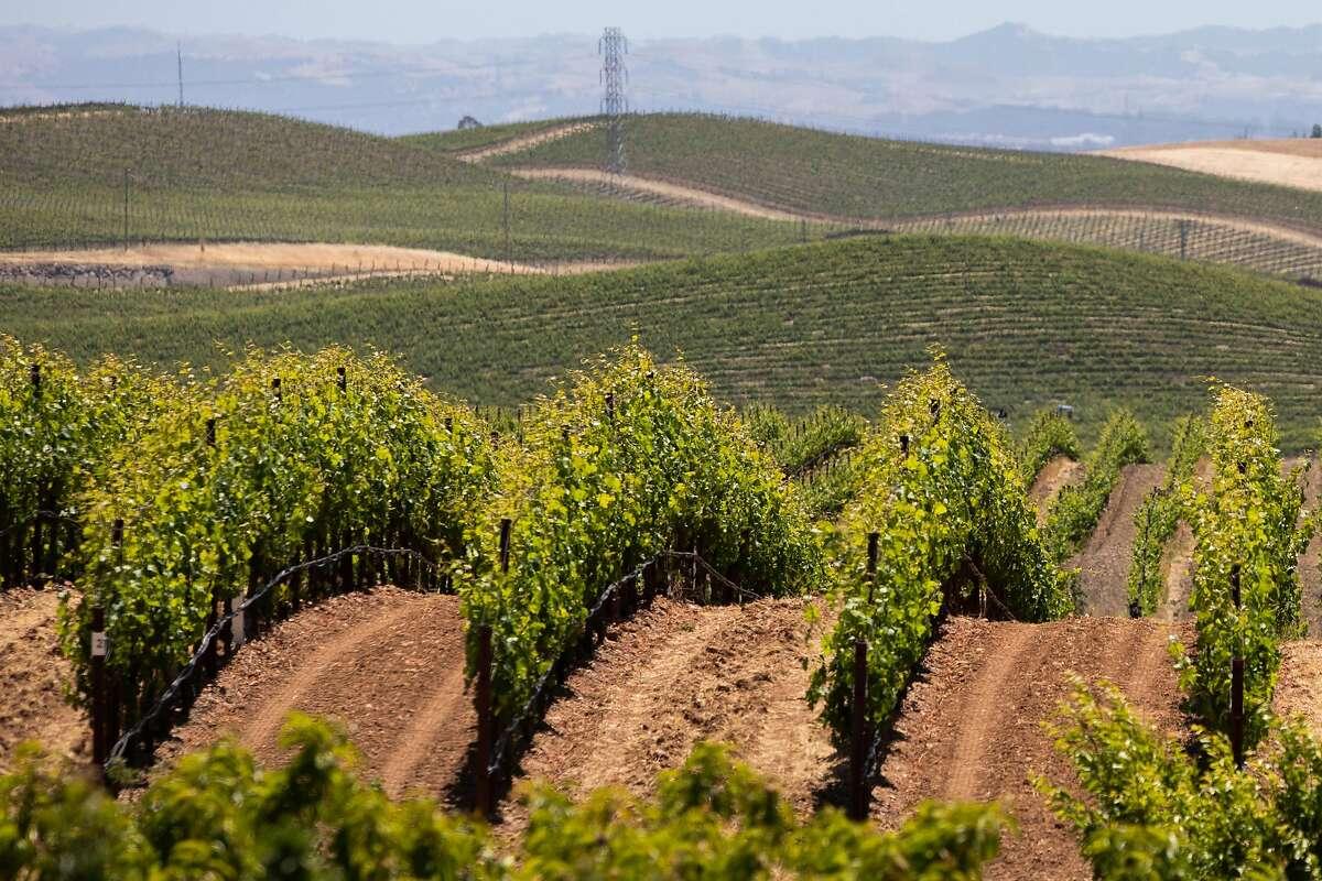 Rows of vines at Hudson Ranch Vineyards in Napa Valley.