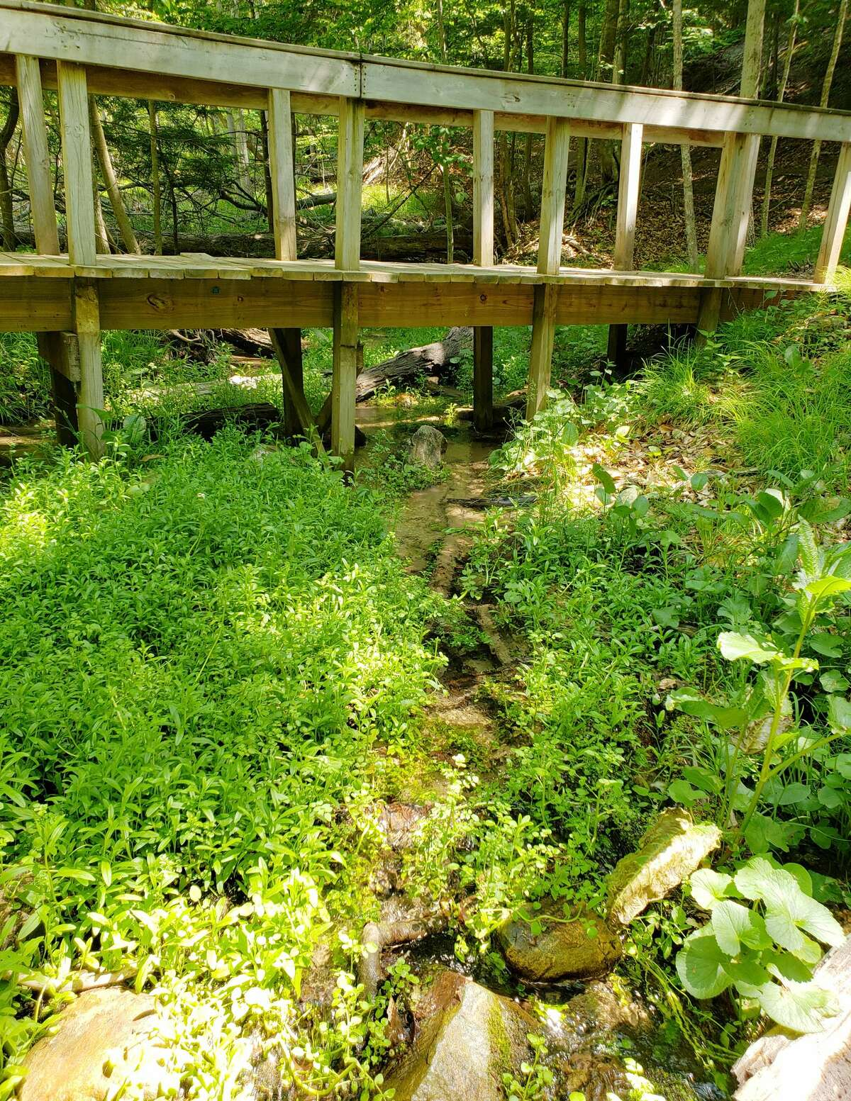 This stream near the springs at Glen Park in Onekama is part of the Portage Lake watershed where a $40,000 grant was awarded and applicats are seeking community input on how the funds should be used for the area.