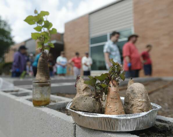 during BrightLife's gardening outing at The Woodlands Family YMCA, Wednesday, June 9, 2021, in The Woodlands. The program, which runs every Monday through Thursday for high school and adults, is part of the organization's outreach for special needs adults. Photo: Jason Fochtman/Staff Photographer / 2021 © Houston Chronicle