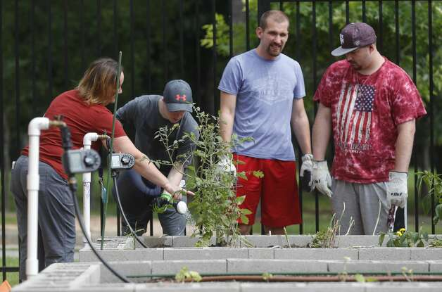 Jill Copland, left, instructs Chase Hampton on how to water plants beside Jake Schneider and Matt Brogan during BrightLife's gardening outing at The Woodlands Family YMCA, Wednesday, June 9, 2021, in The Woodlands. The program, which runs every Monday through Thursday for high school and adults, is part of the organization's outreach for special needs adults. Photo: Jason Fochtman/Staff Photographer / 2021 © Houston Chronicle