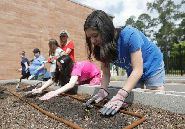 Jordan Sallick, right, and Ema Hernandez dig holes to plant sweet potatoes during BrightLife's gardening outing at The Woodlands Family YMCA, Wednesday, June 9, 2021, in The Woodlands. The program, which runs every Monday through Thursday for high school and adults, is part of the organization's outreach for special needs adults. Photo: Jason Fochtman/Staff Photographer / 2021 © Houston Chronicle