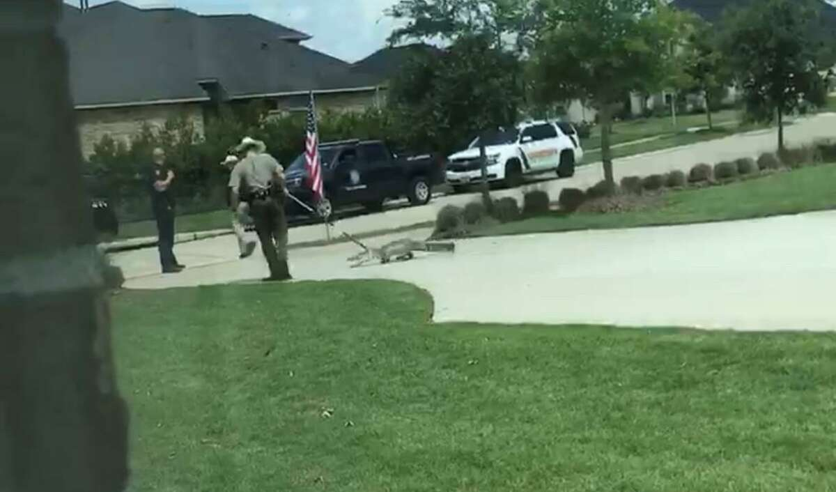 This still from a bystander video shows a Texas Department of Parks and Wildlife officer leading a captured alligator away from a residence in Fulshear. The animal was later shot