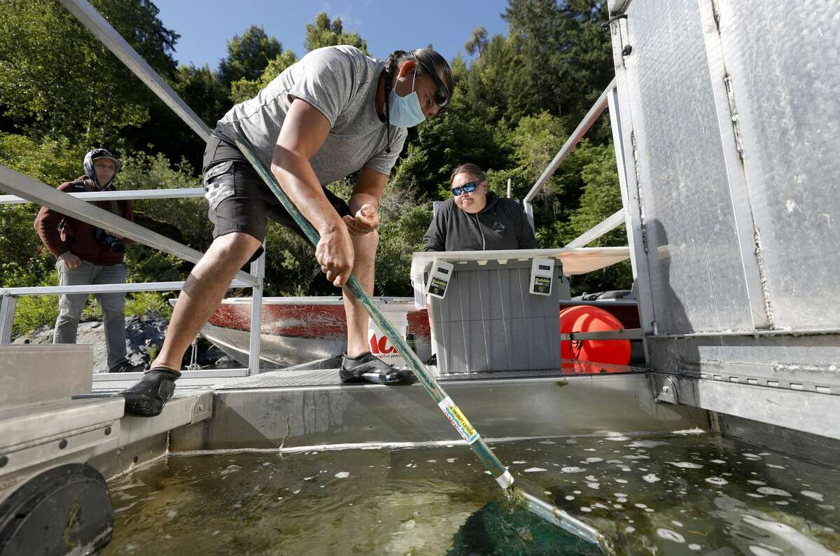 Gilbert Myers, left, and Jamie Holt, right, fisheries technicians with the Yurok Fisheries Department, look for fish captured by a rotary screw trap on the Klamath River on June 9, 2021, in Weitchpec, Calif.