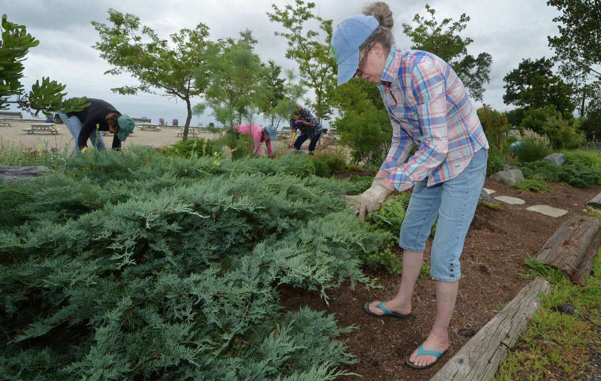 The Rowayton Gardeners including Pamela Proctor work on the xeriscape garden Friday, August 31, 2018, on the established berms which form a pollinator-friendly barrier between the parking lot and the sand at Bayley Beach in Norwalk, Conn.