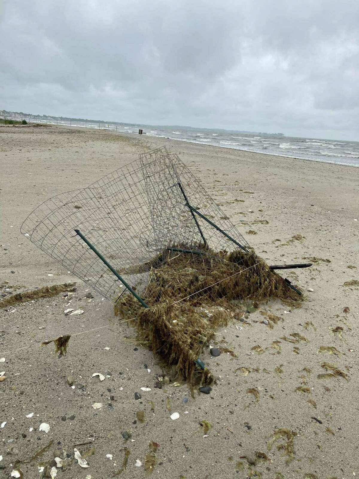 Flooding wiped away the nests of endangered birds at Milford Point in recent days, and the public's care is required for them to recover, according to the Connecticut Audubon Society. Here, a piping plover nest.