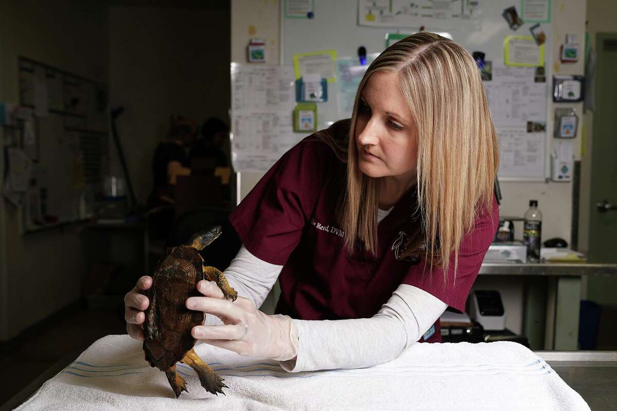 Veterinarians have nurtured a system of group and emergency practices that is family-friendly.