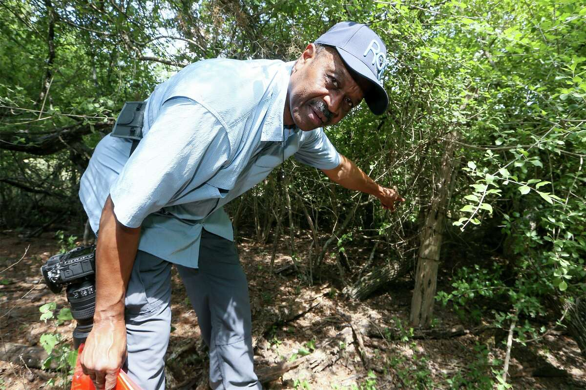 Local historian Everett Fly points to a cedar fence post on the northern boundary of the site of the Winters-Jackson cemetery, an African American graveyard on the northeast side that dates back to the late 1800s, on Thursday, May 31, 2018. In 1986, without consent, land developers removed the remains of 72 people from the private cemetery and reinterred them at nearby Holy Cross Cemetery. MARVIN PFEIFFER/mpfeiffer@express-news.net