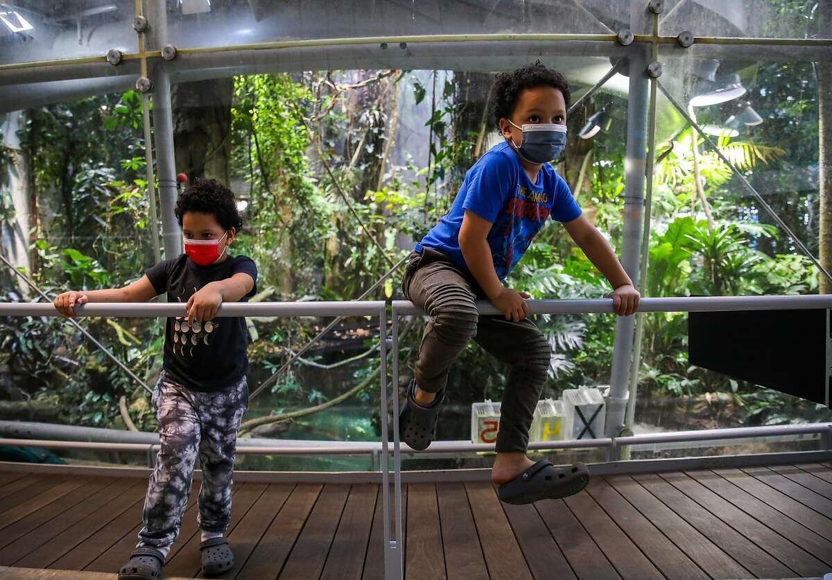 5-year-old twins Jaxon Mcneally, left, and Jonah Mcneally, of Daly City, hang out at the Rainforest exhibit as they visit the California Academy of Sciences with their parents and baby brother on Thursday, June10, 2021, in San Francisco, Calif. The California Academy of Sciences is planning to do a bit of a slower full reopening, potentially keeping mask requirements in place longer than the rest of the state for example, partly because so many of its visitors are little kids who can't be vaccinated.