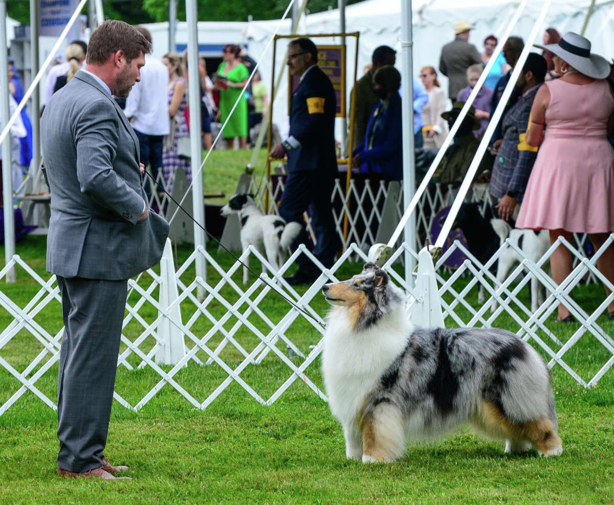 """A Boerne collie named """"Fannie"""" won """"Best in Variety"""" in her breed at the 2021 Westminster Dog Show."""