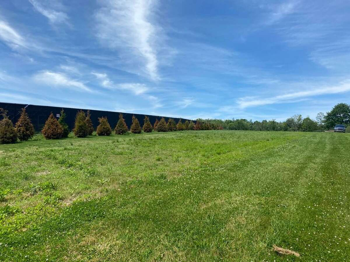 Verogy, the company that has installed an array of solar panels on East Pearl Road in Torrington, says they are planting grass and trees and will replace any dead trees around the site.