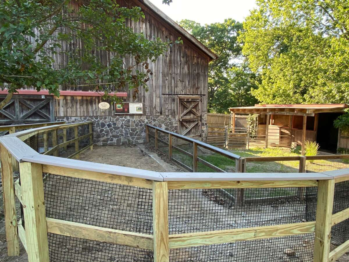 The Farmyard exhibit at the Beardsley Zoo will reopen on June 12.