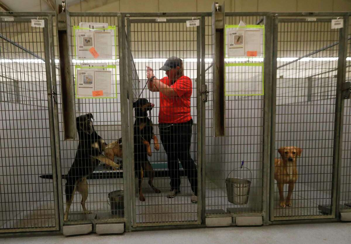 Officials with the Montgomery County Animal Shelter are making a plea to the public as the number animals in the shelter grows to almost 800. In this file photos, MCAS Volunteer Tracey Diagle helps walk dogs at the Montgomery County Animal Shelter.