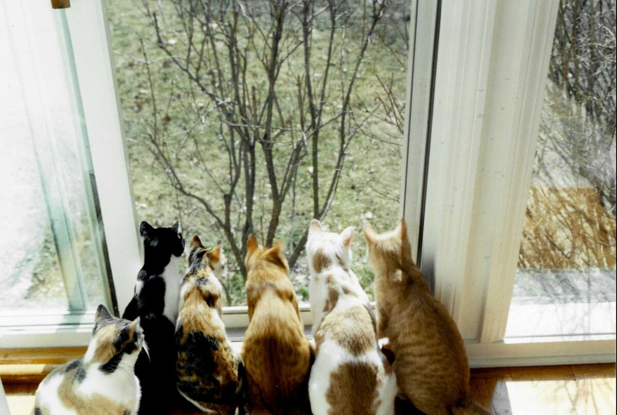 Daisy and her five kittens take in the sights.
