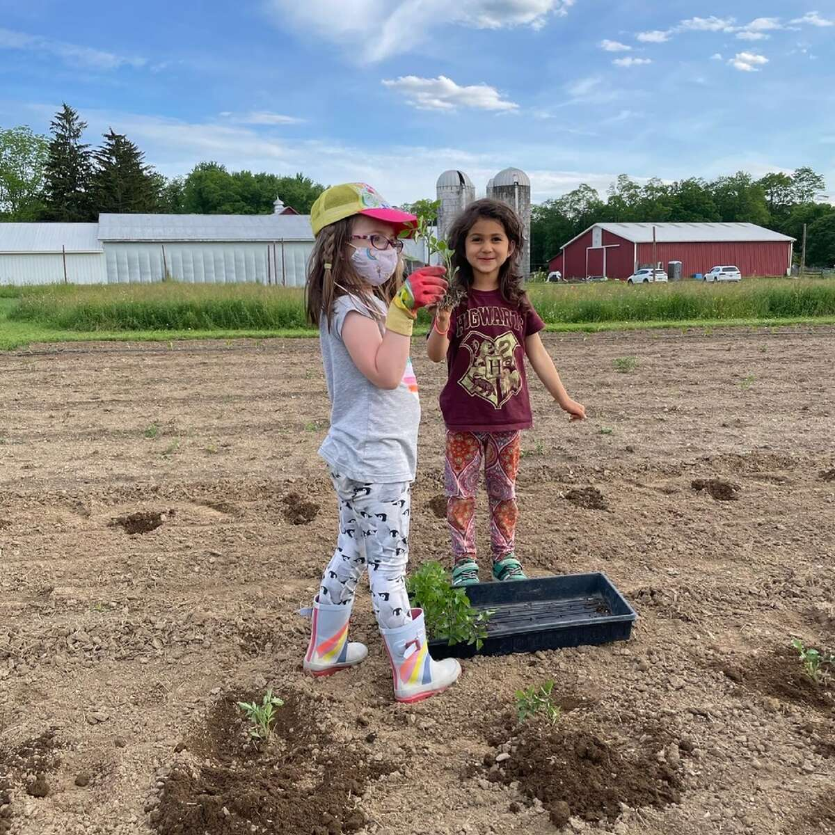 Everyone helps to plant the Four Corners Community Farm field where organic produce will grow and be donated to Red Hook Responds, the local food pantry that also supplies meals to the hungry. Here is Madeline Renee Blatt, left, and Leonora Rose Cortina, Sam Rose's daughter.